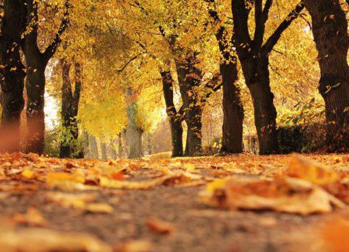 Bipolar bozuklukta sonbaharda çökkünlük ortaya çıkabilir