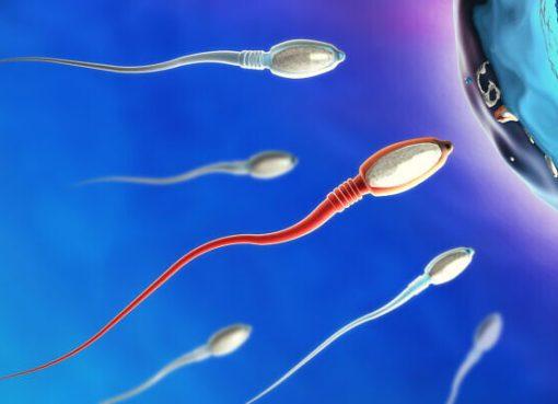 COVID-19 sperm üretimini olumsuz etkileyebilir