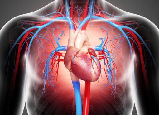 Kardiyovasküler hastalıklar, dünya genelindeki ölümlerin bir numaralı sebebi olarak biliniyor. Sağlıksız beslenme, yetersiz fiziksel aktivite, tütün kullanımı ve alkol kullanımının en önemli sebepler arasında bulunduğu kardiyovasküler hastalıkların yaygın göstergeleri ise ateroskleroz ve hipertansiyon. Özellikle pandemi döneminde kalp sağlığının korunmasının daha da önem kazandığına dikkat çeken Abbott, tedavi edilebilir bu rahatsızlıklar için ise ilk adımın doğru bir teşhis olduğunu belirtiyor.